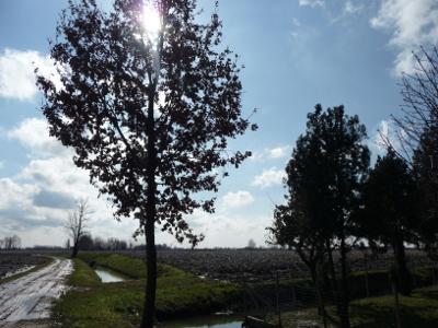 Valli Grandi Veronesi