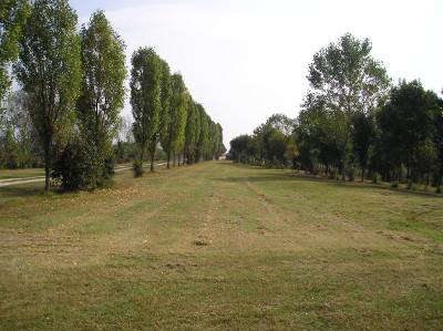 Bosco del Tartaro