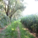 sentiero nella palude del Brusà
